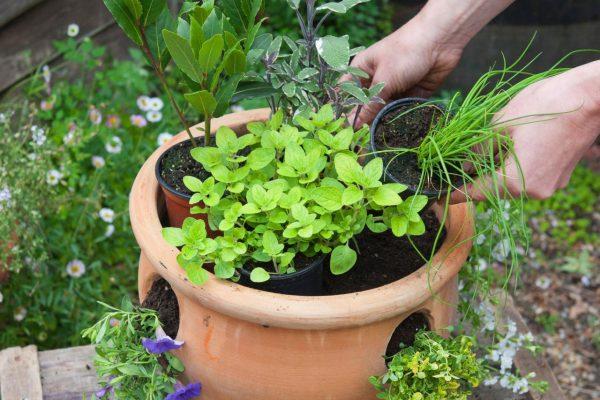 giardino-aromatico-2-600x400